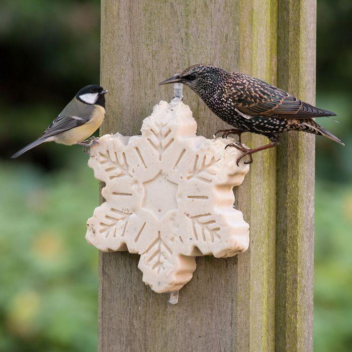 friandise de graisses pour oiseaux
